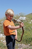 European glass lizard, armored glass lizard Ophisaurus apodus, Pseudopus apodus, single animal in the hands of a small boy, Greece