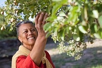 African woman picking fruit