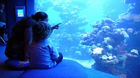 mother with child in front of aquarium