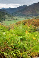 bracken fern Pteridium aquilinum, Ferns at autumn in Liebana valley, Spain, Cantabria, Picos De Europa National Park