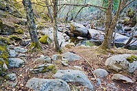 Garganta de Iruelas  Sierra de Gredos  Ávila  Castilla León  España