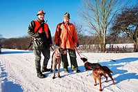 Weimaraner Canis lupus f. familiaris, hunter with their dogs in winter, Germany