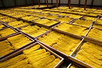Precooked pasta laid out to dry, pasta factory, Demerara Province, Guyana, South America