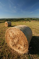 Hay rolls on farming field in summer, Aberdeenshire, Scotland