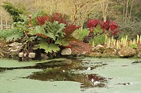 Pond with water plants in the garden of Drum castle, Scotland