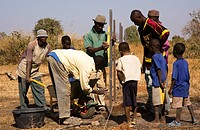 Man and boys building a fence for the school vegetable garden, Kass Wolof, The Gambia