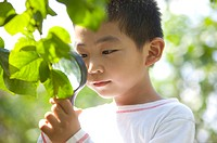 Boy holding magnifying glass on the leaf