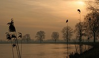 Contrasting trees and reed along river Maas during early morning, The Netherlands
