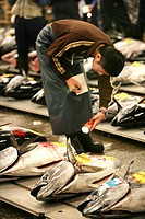 World largest fish wohlesale market Tsukiji Auction of fresh and frozen tuna fish Tokyo Japan