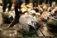 Fish, Fish market, Tsukiji, Tokyo, Japan, Asia
