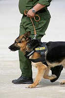 A german policeman walking with his police dog.