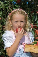 little girl reaping apples and biting in one of it