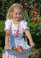 little girl reaping apples