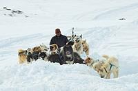 Greenland Dog Canis lupus f. familiaris, Inuit on dog sledge, Greenland, Ostgroenland, Tunu, Kalaallit Nunaat, Scoresbysund, Kangertittivag, Kap Tobin...