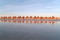 Camel caravan with tourists, Cable Beach, Broome, Kimberly, Western Australia