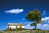 Old barn with tree, Andalusia, Spain