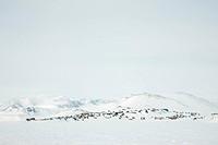 view of Ittoqqortoormiit, Greenland, Ostgroenland, Tunu, Kalaallit Nunaat, Scoresbysund, Kangertittivag, Ittoqqortoormiit