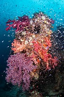 Coral reef community. Coral reefs are extensive and diverse marine ecosystems. Corals themselves are tiny animals that live in colonies. Corals may be...