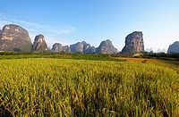 Karst peaks and rice field, Yangshuo, Guilin, Guangxi, China