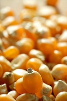 Dried macro corn seeds in orange color, as a texture background crop