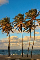 Tall palm trees on a Cuban beach, sunset
