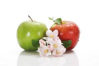 Red and green apple covered with water drops, leaves and apple blossoms