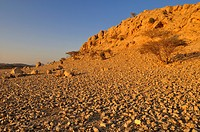 Rocky desert landscape near Sinaw, Sharqiya Region, Sultanate of Oman, Arabia, Middle East