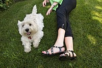 Woman on grass with her West Highland Terrier, Whitby, Ontario