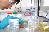 Male lab worker with petri dishes (thumbnail)