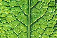 Close_Up of Leaf