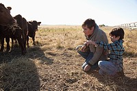 Son showing father cattle