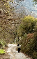 A country lane in the Outer Mani near Kastania in the foothills of theTaygetos Mountains Mani peninsular, Southern Greece