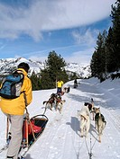 Sled dog race  Andorra  Pyrenees