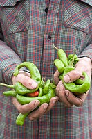 Farmer holding chilli peppers