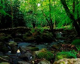 Kilfane Glen, Co Kilkenny, Ireland, Woodland Walk And Stream