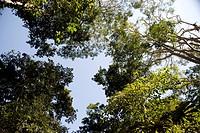 Treetops, Puerto Vallarta, Mexico