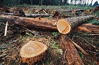 Cut logs in logging area