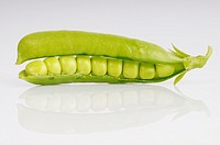 Stock photo of fresh green peas in their pods shot against a white background
