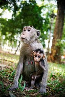 Mother and Baby Monkey Hugging