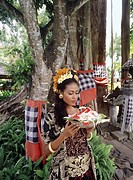Balinese girl with offerings under a banyan tree in Bali, Indonesia, Southeast Asia, Asia