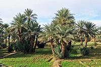 Vallée du Drâa, Draa Valley, Zagora province, Sous-Massa-Drâa, Morocco, Africa, december 2009