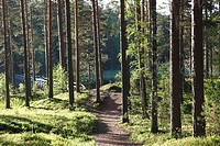 Trees and walking track, Punkaharju Nature Reserve, Punkaharju Ridge, Saimaa Lake District, Savonia, Finland, Scandinavia, Europe
