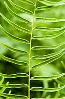 young green fern abstract background