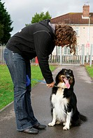 Domestic Dog, Border Collie, having lead put on by woman owner in park, Gosport, Hampshire, England