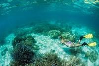 Korallenriff und Schnorchlerin, Mikronesien, Palau, Snorkeling at shallow Coral Reef, Micronesia, Palau