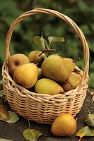 Pears in a wicker basket