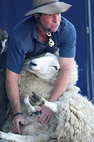 New Zealander Stuart Barnes of the Sheep Show demonstrates sheep shearing  Turriff Agricultural Show, Aberdeenshire August 2009, one of Scotland's lar...