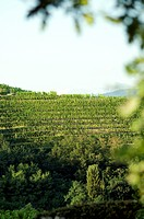 Vineyards (thumbnail)