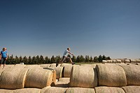 Boy jumping over space between bales, Redvers, Saskatchewan, Canada