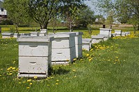lachenaie, quebec, canada, beehives producing honey at an apiary farm in spring
